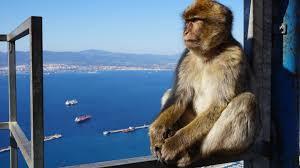 Gibraltar criptoparaíso fiscal