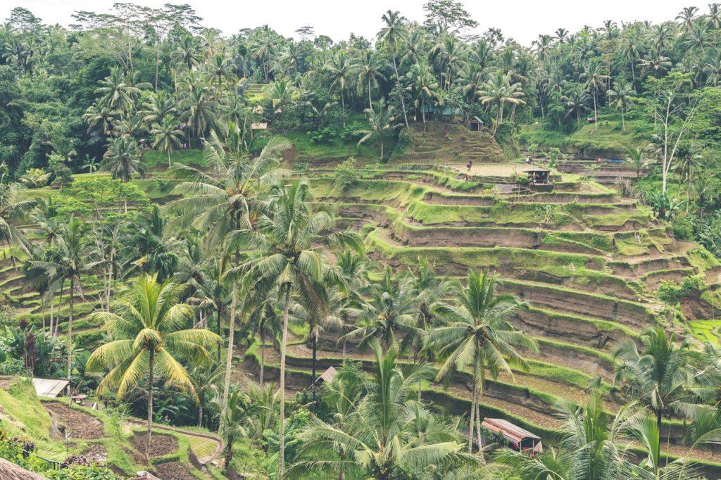 cultivos en bancales en Indonesia