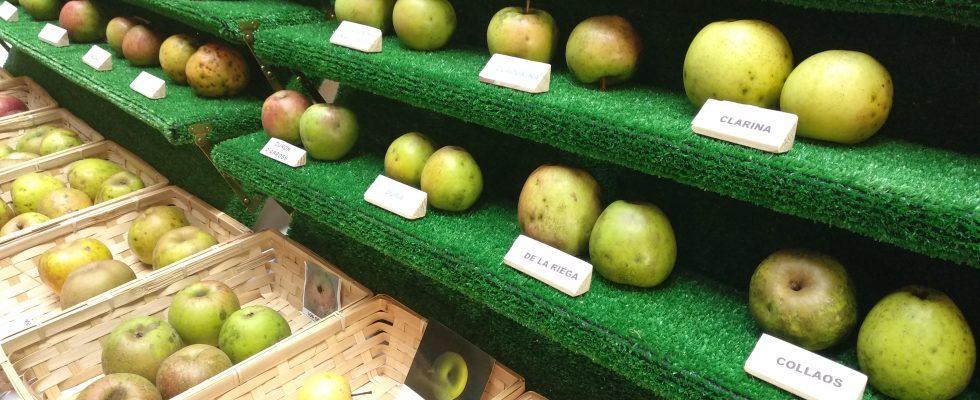 manzana sidra