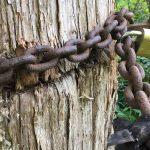 cedro encadenado blockchain 1
