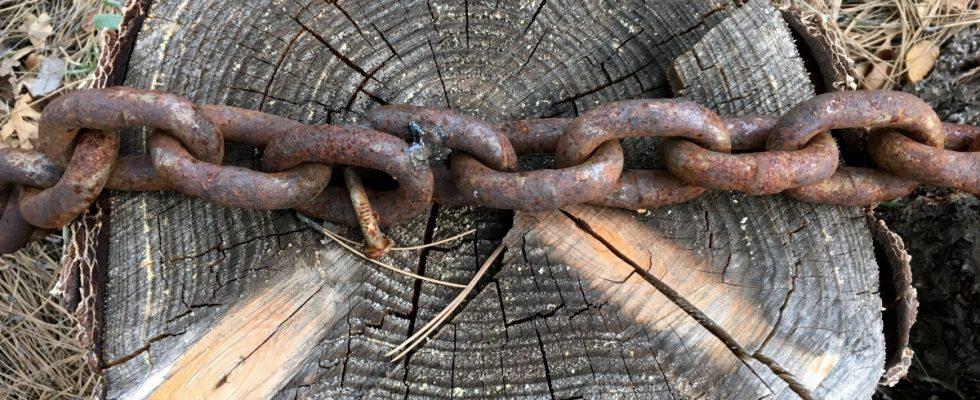 chainwood blockchain maderera 1