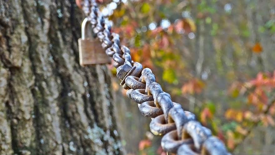 chainwood blockchain maderera 2
